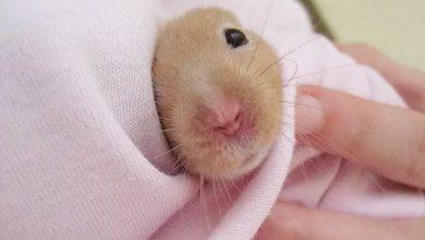 Photo of Why is My Hamster Getting Thinner?