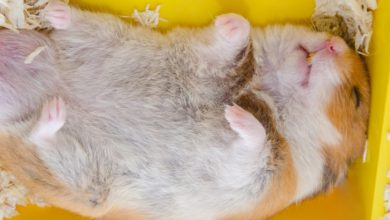 Photo of How to wake hamster up from hibernation?