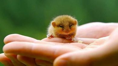 Photo of Are hamsters good pets for 9 years old?