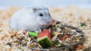 Photo of Can Hamsters Eat Raw Pumpkin Seeds?