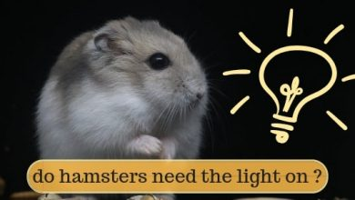 Photo of Can a hamster see in the dark?