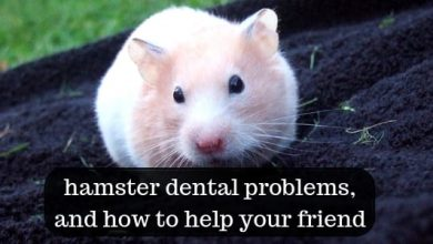 Photo of Do hamsters need to brush their teeth?