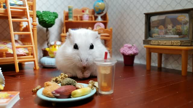 How can you tell if a Syrian hamster is happy?