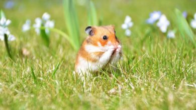 Photo of How does a hamster adapt to its environment?