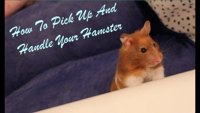 Photo of How to pick up a baby hamster?