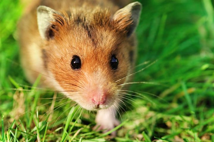 How to tame a nervous hamster?