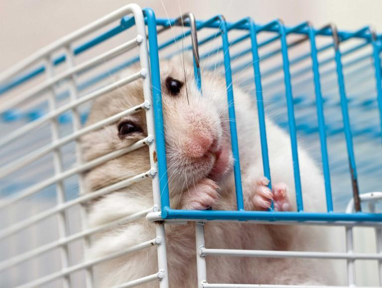 Is keeping a hamster in a cage cruel?