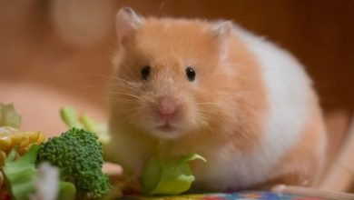 Photo of Can Hamster Eat Cucumber Skin?