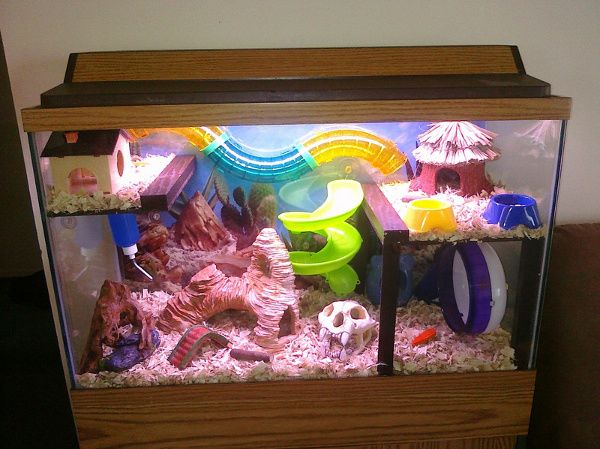 Can hamsters live in a fish tank?