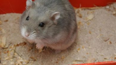 Photo of How to make a litter box for hamsters?