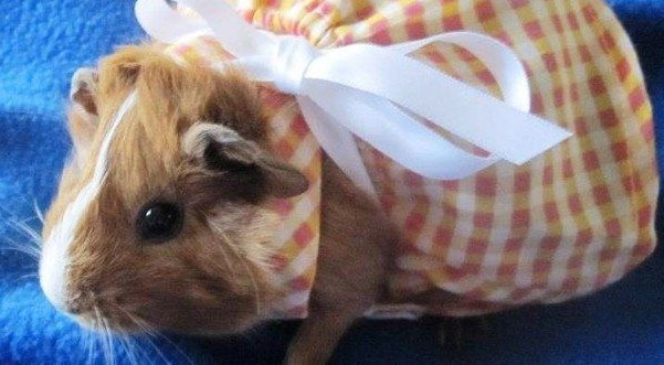How to make clothes for your hamster?