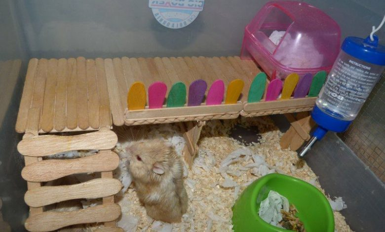 How to make hamster toys at home?