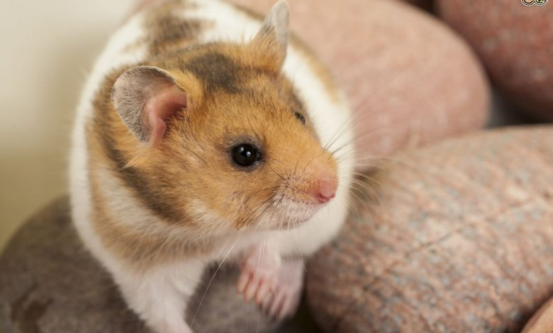 How to teach your hamster its name?