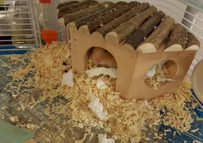 What Should I Use for Hamster Bedding?
