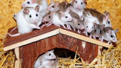 Photo of Where do pet stores get their hamsters?