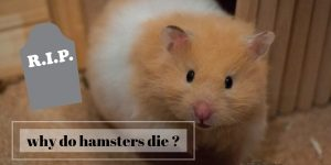 Do Hamsters Suffer When They Die?