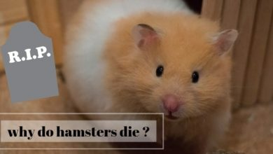 Photo of Do Hamsters Suffer When They Die?