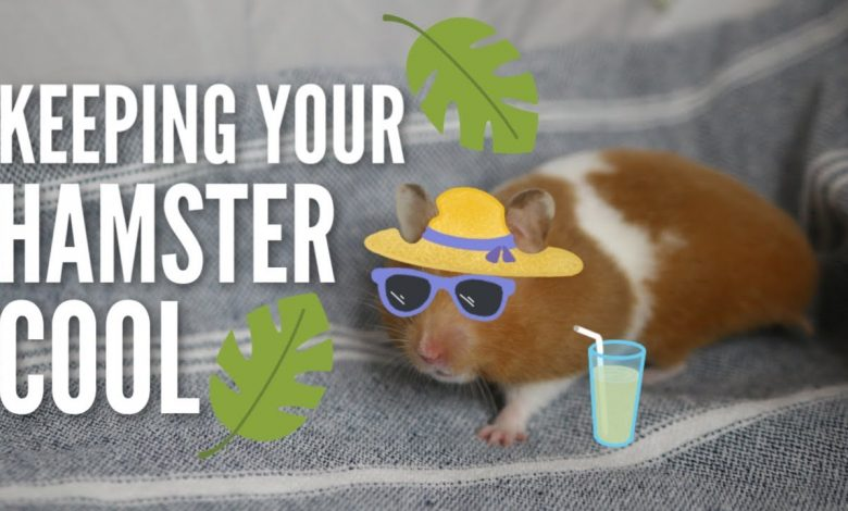 How Can I Keep My Hamster Cool in Summer?