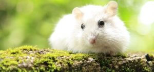 How to Help Hamster Lose Weight?