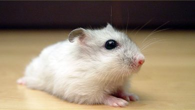 Photo of Can Hamsters Eat Cantaloupe Seeds?