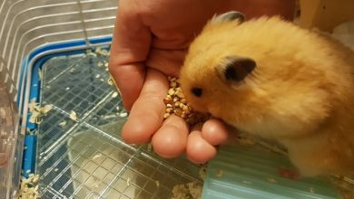 Photo of Can Hamsters Eat Zucchini Seeds?