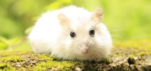 How to train your hamster to play dead?